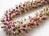 Sweet Pea Blossom Lei